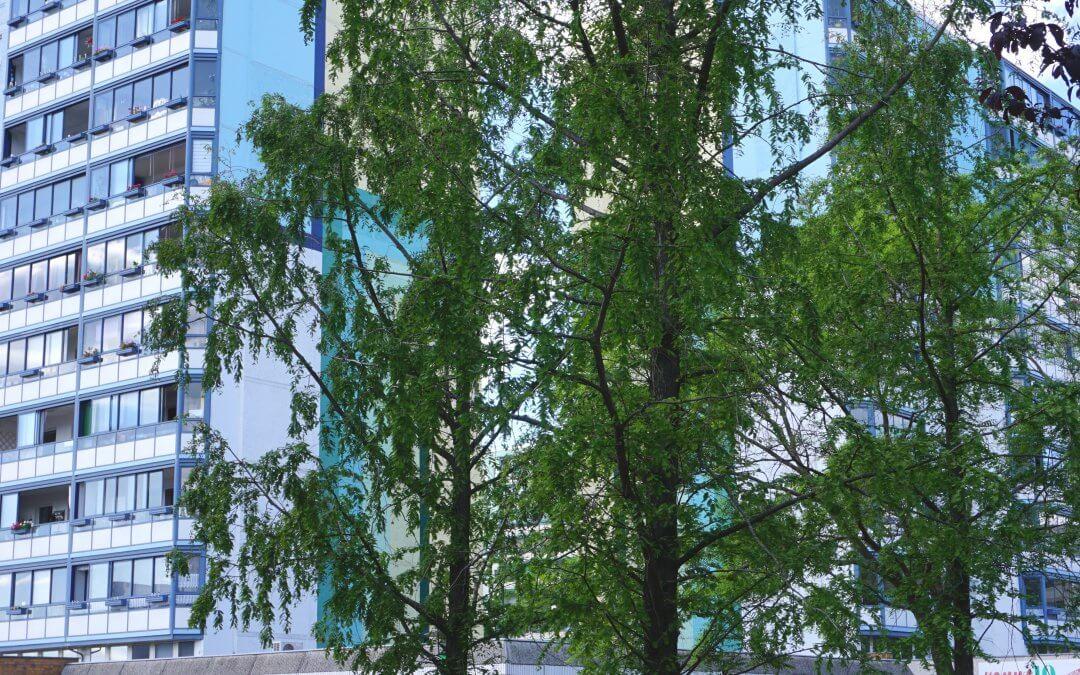 """Exotische Bäume im zentralen Bereich des Grünzuges / Projekt """"Natur im Kosmosviertel"""""""