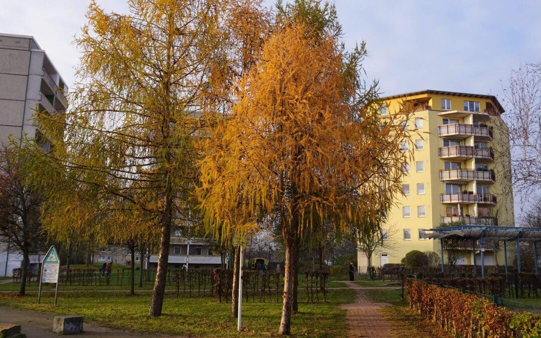 """Europäische Lärche / Projekt """"Natur im Kosmosviertel"""""""