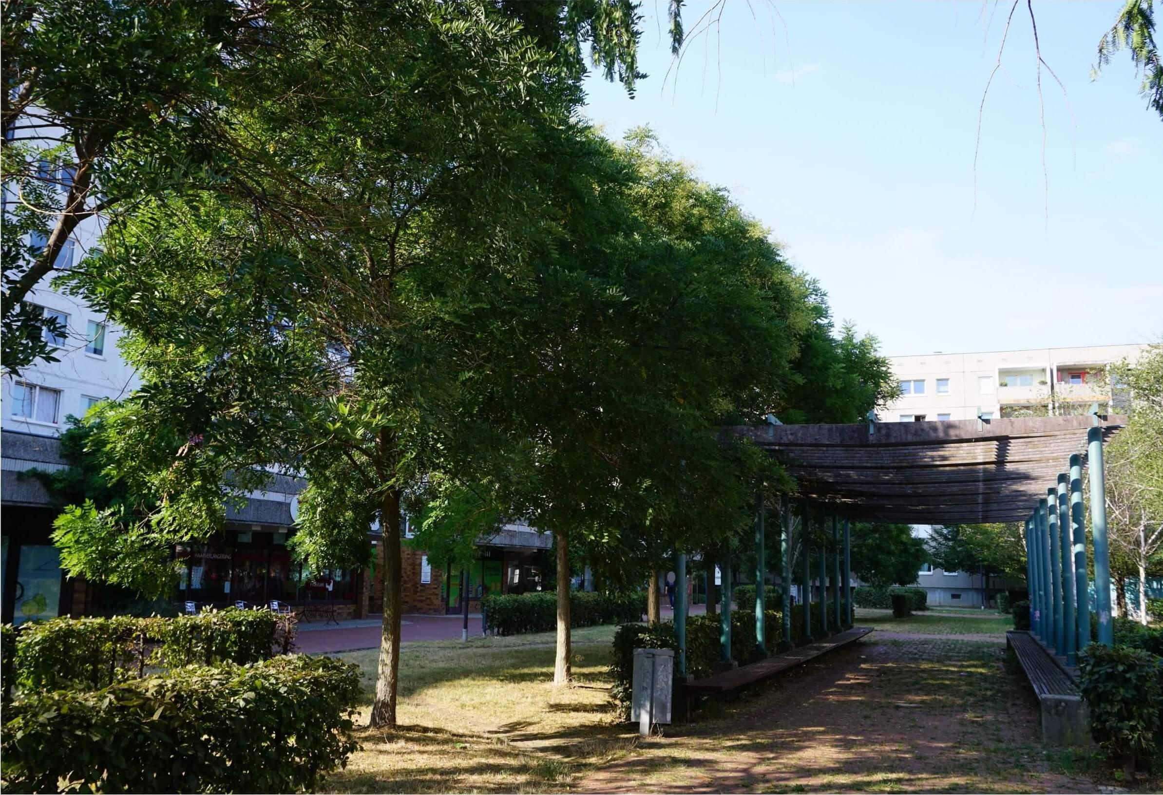 Das Bild zeigt in Reihe gepflanzte Schnurbäume in der zentralen Ladenzeile des Kosmosviertels. Sie sind Bestandteil des Grünzuges und hier von einer Pergola flankiert.