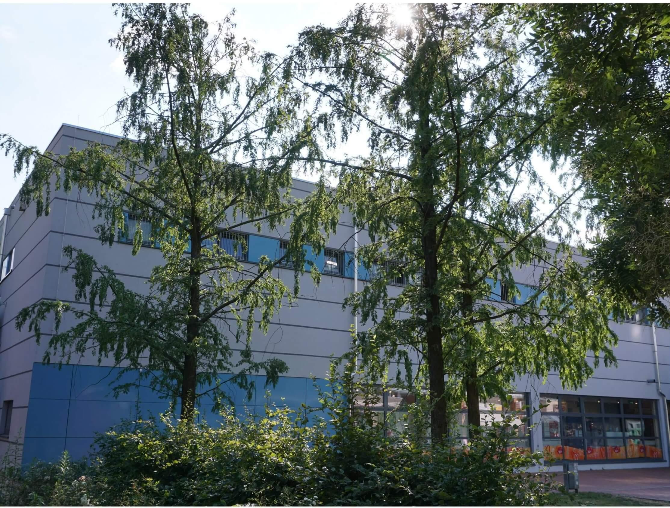 Das Bild zeigt eine Gruppe aus drei Urweltmammutbäumen in der zentralen Ladenzeile des Kosmosviertels als Teil der Erstbepflanzung des Grünzuges.