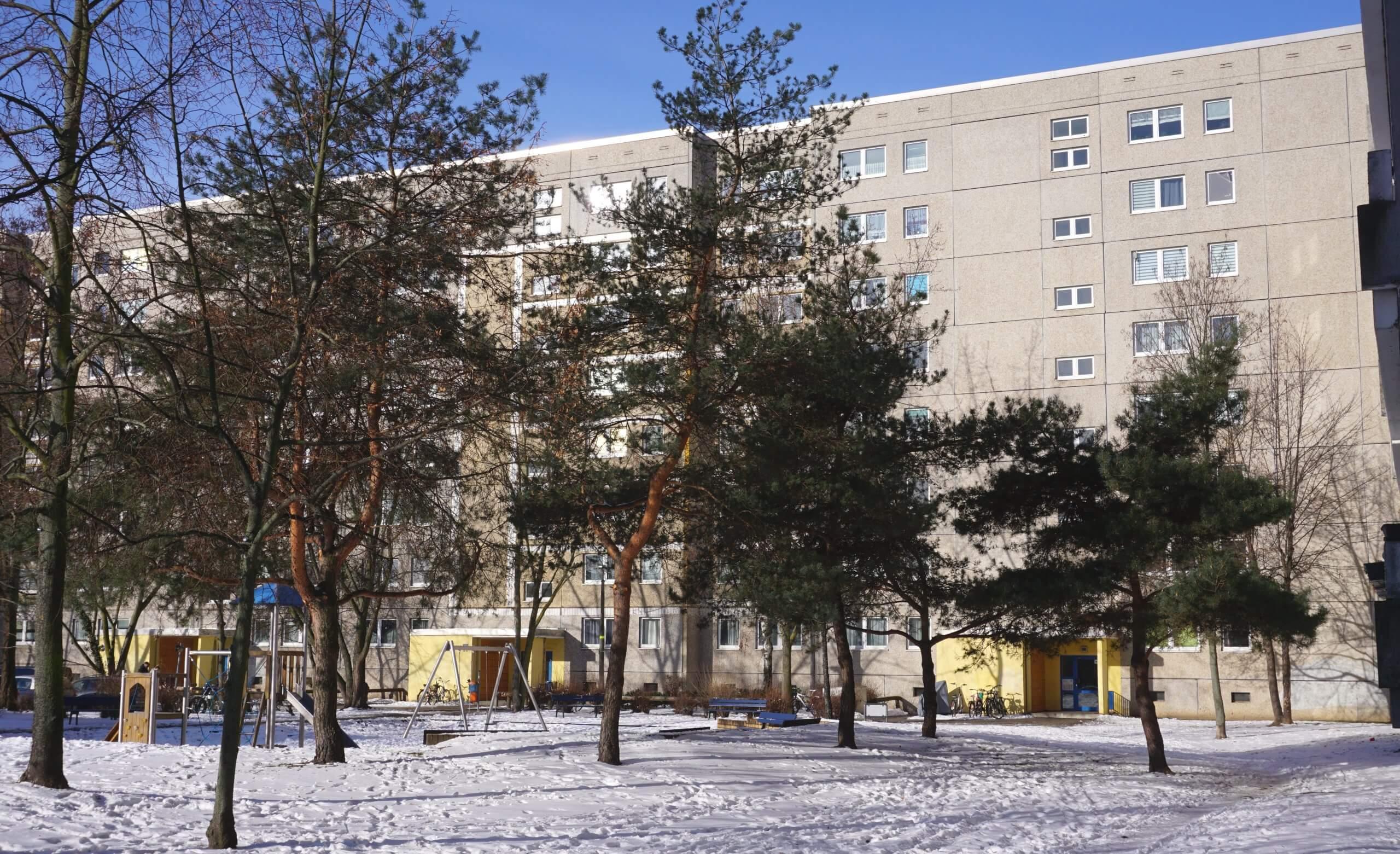 Das Bild zeigt eine Anzahl von Wald-Kiefern in einer Grünanlage im zentralen Kosmosviertel unweit des Bürgerhauses.