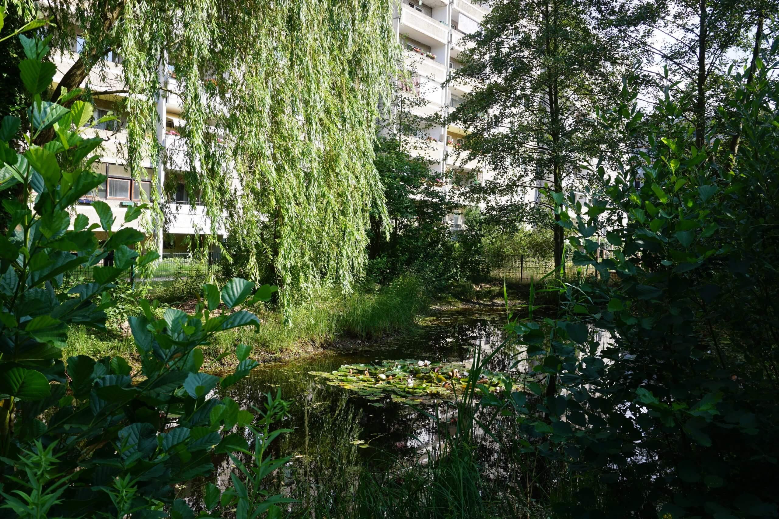 Das Bild zeigt den Teich im zentralen Kosmosviertel mit Seerosen, einer Trauerweide und Schwarz-Erlen.