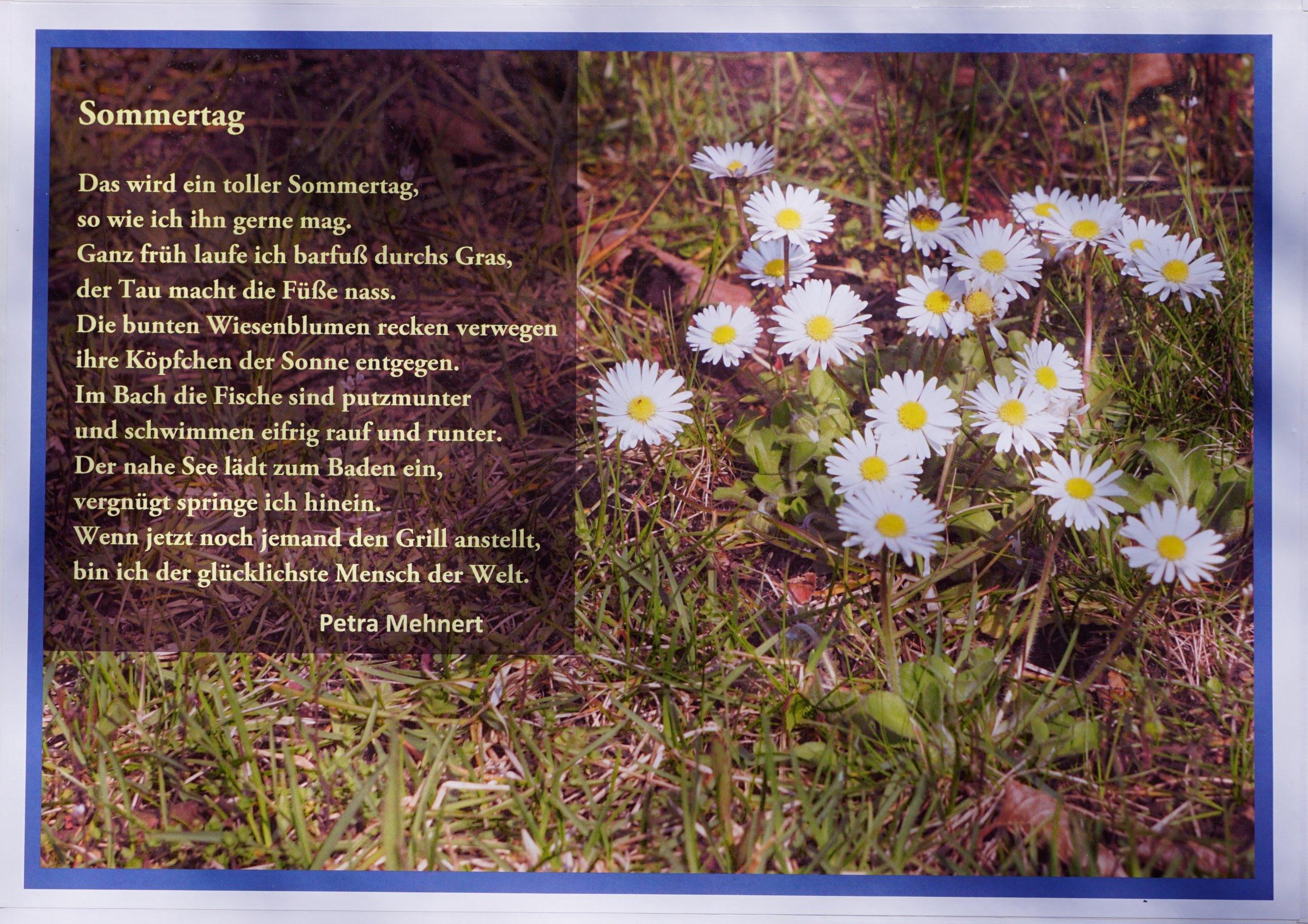 """Das Bild zeigt das Gedicht """"Sommertag"""" von einer Bürgerin aus Bohnsdorf in einer Gestaltung mit Margariten."""