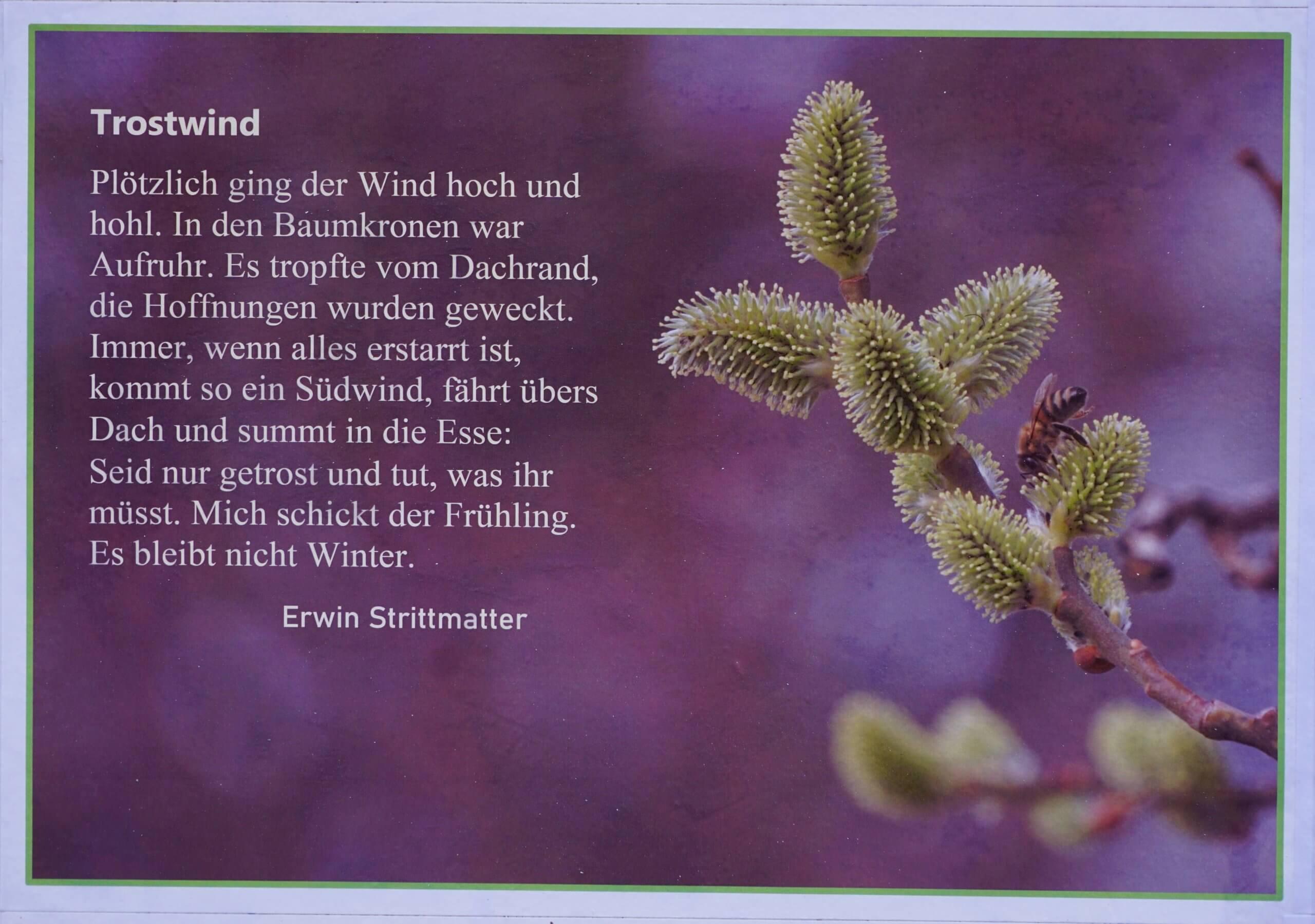 Das Bild zeigt die Motivgestaltung mit einer Naturbeobachtung von Erwin Strittmatter mit viel Poesie.