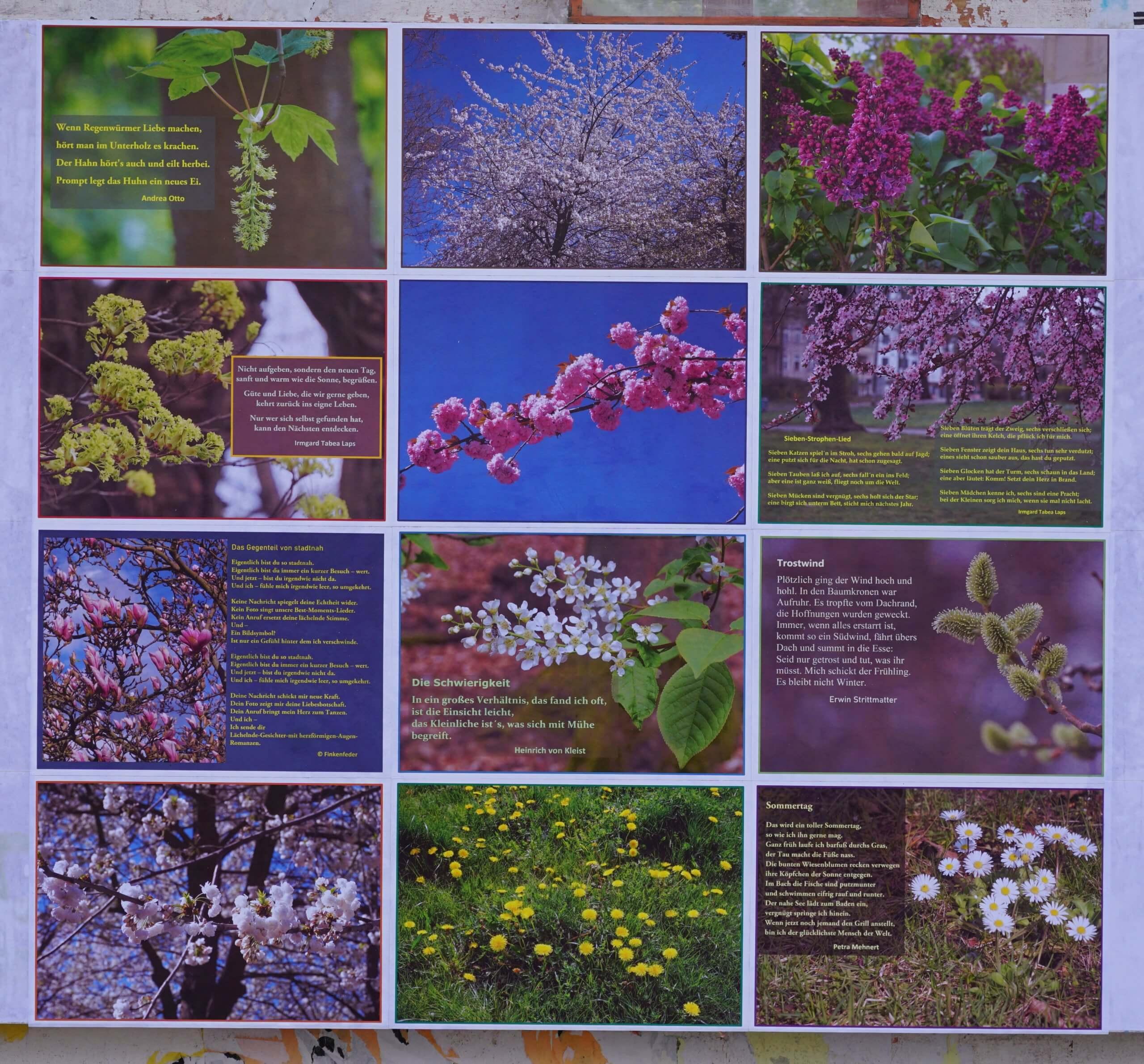 Das Bild zeigt das aktuell ab dem 6. Mai auf der Rückseite der Infowand am Forum im Kosmosviertel zu sehendes Mosaik mit Gedichten und Fotomotiven aus der Natur.