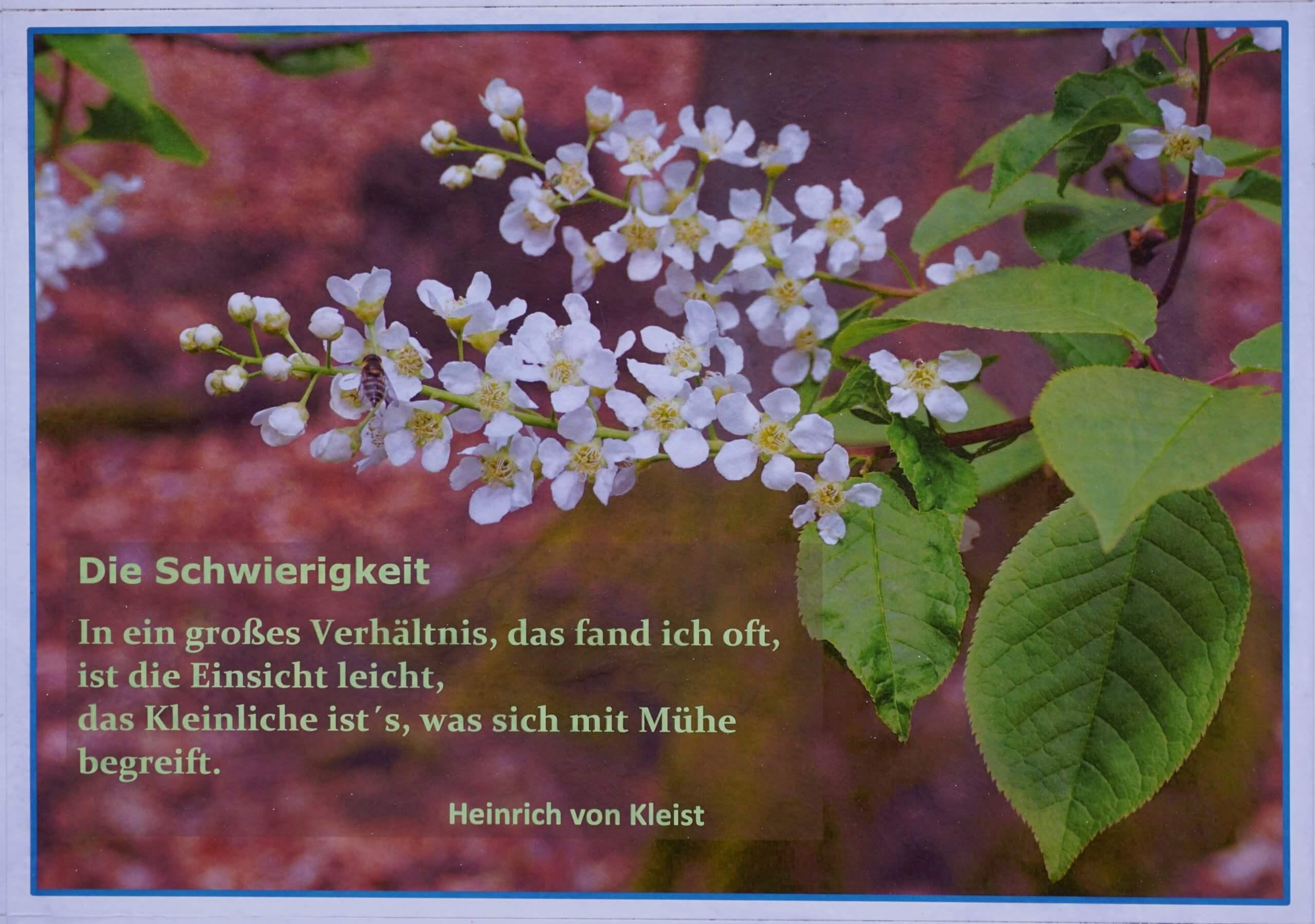 Das Bild zeigt ein Epigramm bzw. Kurzgedicht von Heinrich von Kleist, gestaltet mit einem Blütenmotiv einer Traubenkirsche.