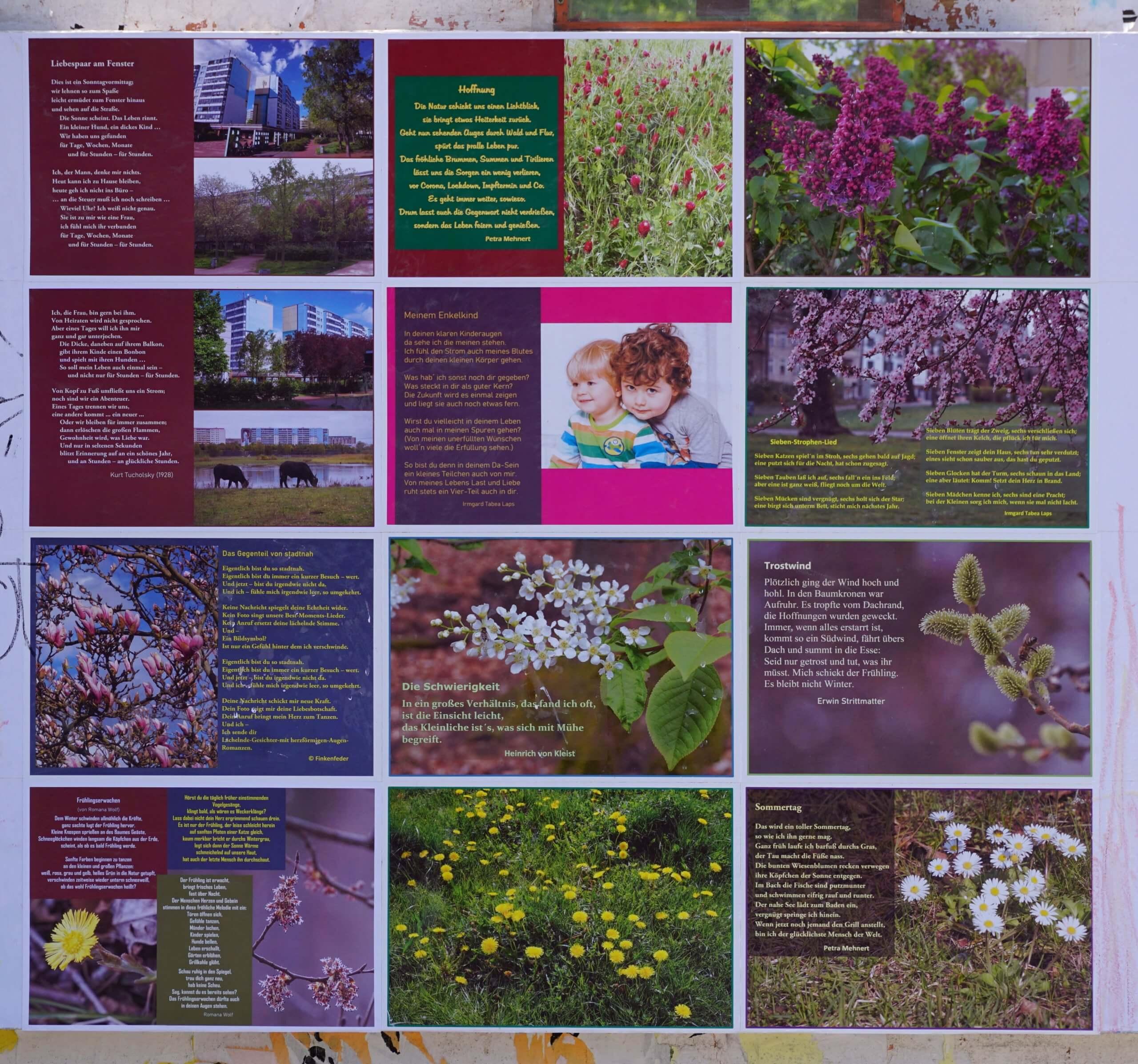 Das Bild zeigt das auf der Rückseite der Infowand am Forum seit dem 31. Mai 2021 zu sehende Mosaik von mit Fotomotiven aus der Natur und aus dem Kosmosviertel gestalteten Gedichten.