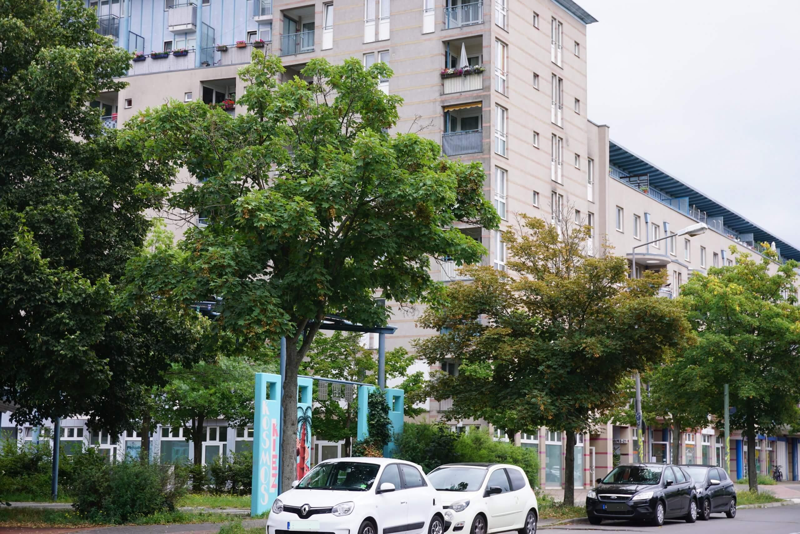 Das Bild zeigt zwei Berg-Ahorne an der Siriusstraße im Bereich des Zugangs zum zentralen Grünzug.